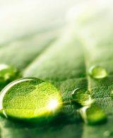 Naturopathie et écologie