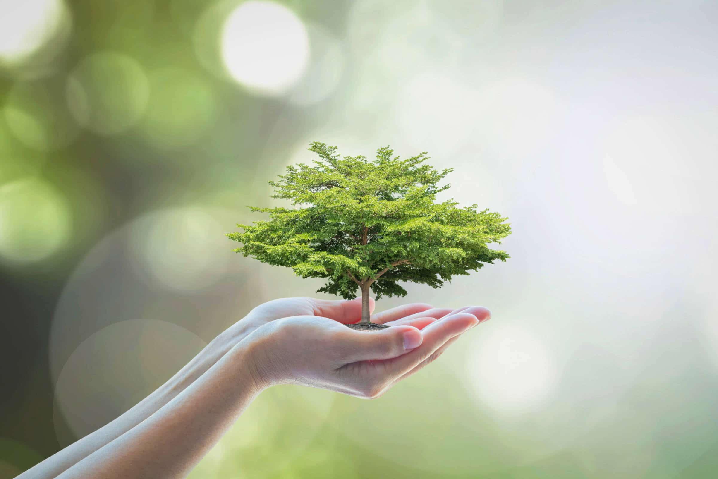 Réflexions sur la Naturopathie 1